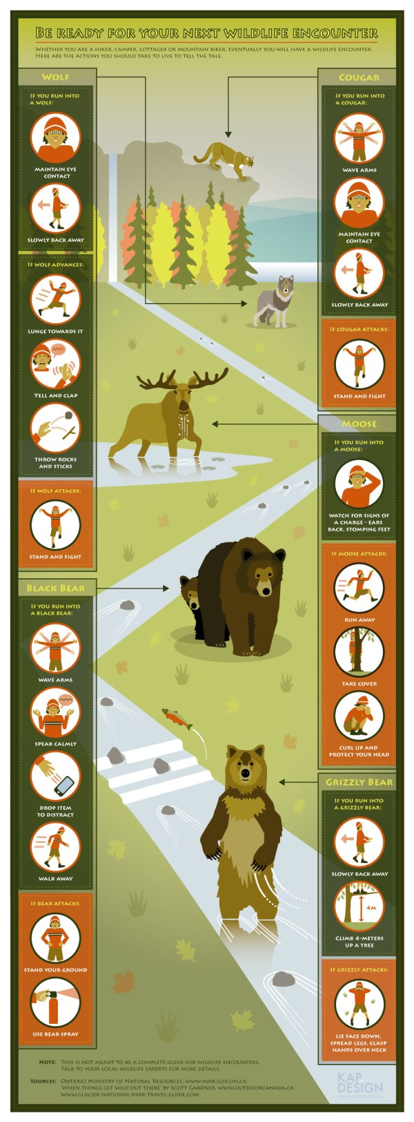 'Be Ready For Your Next Wildlife Encounter' infographic by KAP.