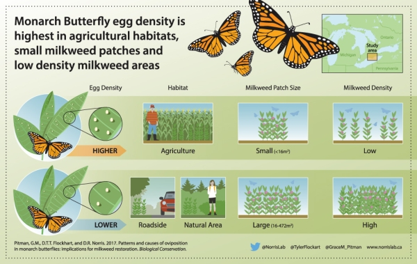 Monarch Butterfly Egg Density Infographic