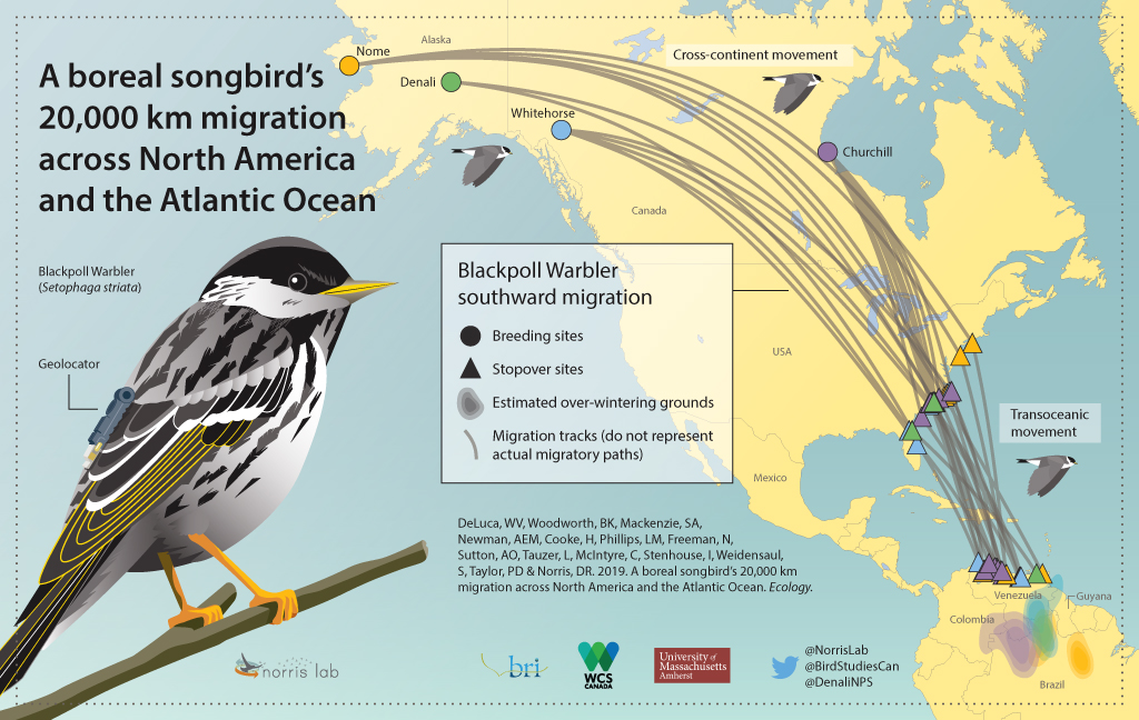 Blackpoll-migration-IG-final-rev-2