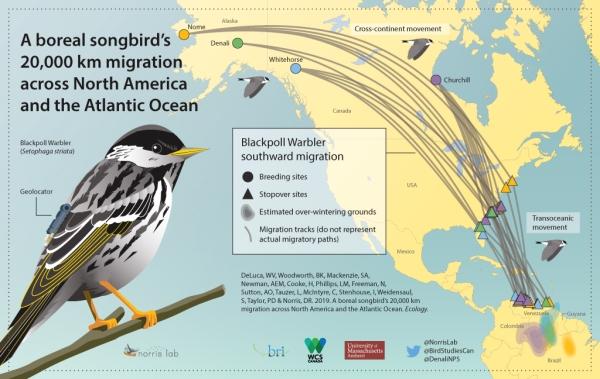 Blackpoll-migration-IG-final-rev-2